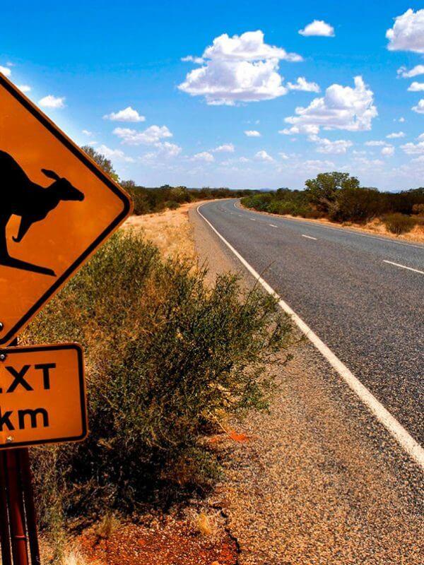 kangaroo-australie