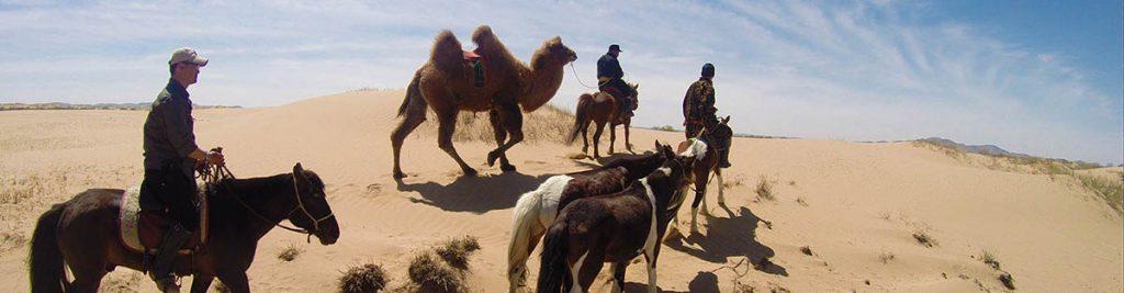 trek-chameau-mongolie