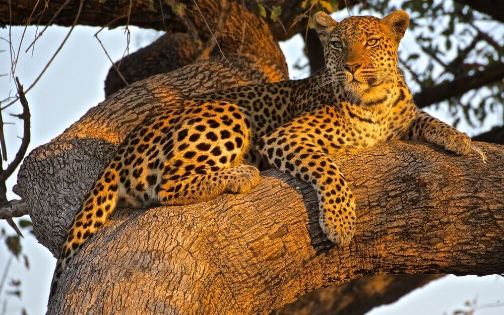 animaux-botswana