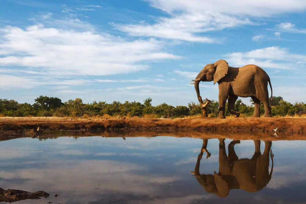 elephants-botswana