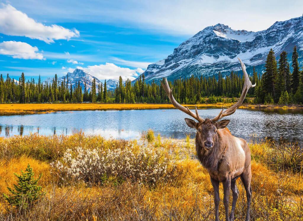 paysage-canada