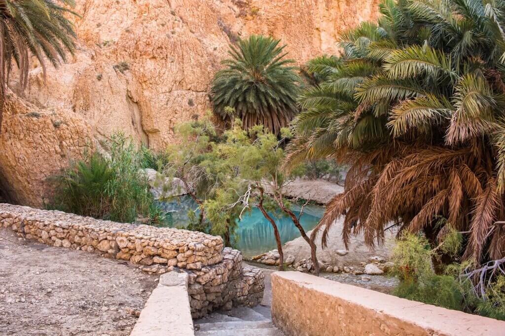 oasis tunisie